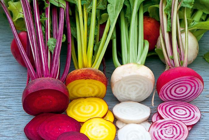 Củ cải nhiều màu sắc thực phẩm biến đổi gen trầm trọng