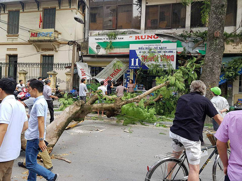 cây cổ thụ đè bẹp xe trên phố
