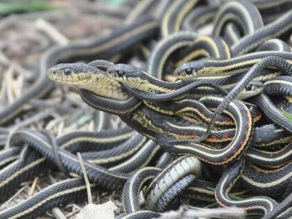 Nằm mơ thấy 3 con rắn đánh xổ số con gì may mắn