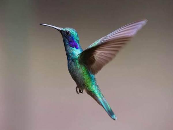 Mơ thấy chim đánh con gì trúng và ý nghĩa giấc mơ