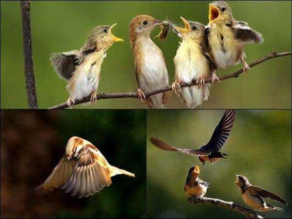 Nằm mơ thấy chim đánh xổ số chắc trúng